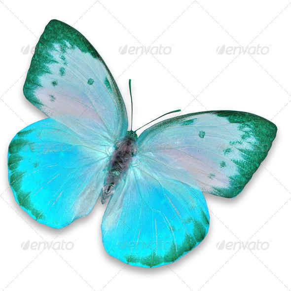 PhotoDune Blue butterfly 3919985