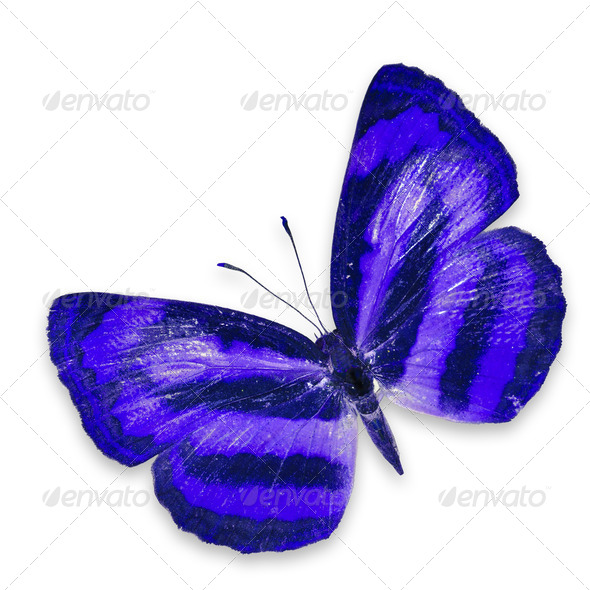 PhotoDune Blue butterfly 3919994