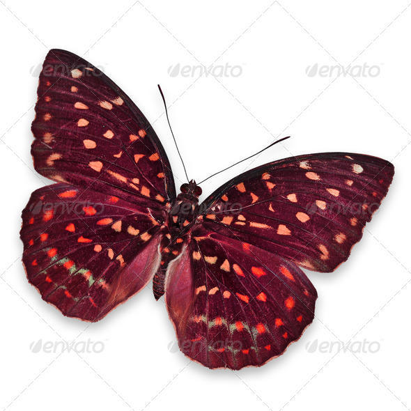PhotoDune Red butterfly 3919995