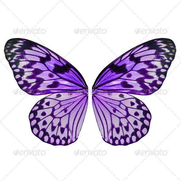 PhotoDune Purple butterfly wing 3919996