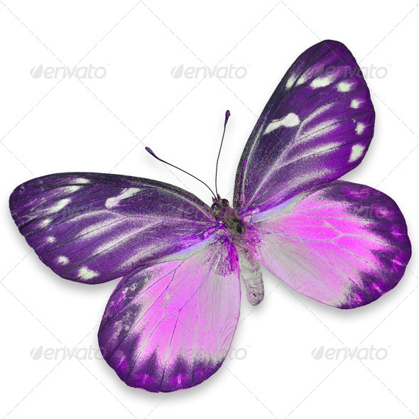 PhotoDune colorful butterfly 3920000