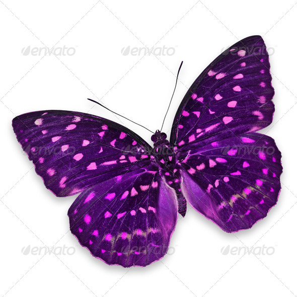 PhotoDune Purple butterfly 3919997