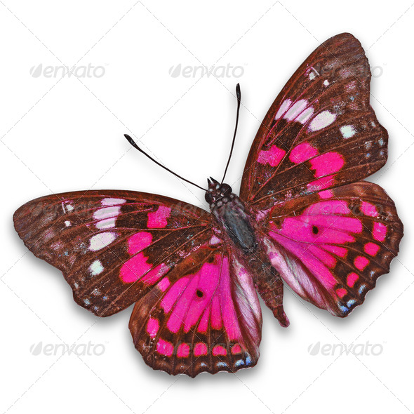 PhotoDune colorful butterfly 3920005