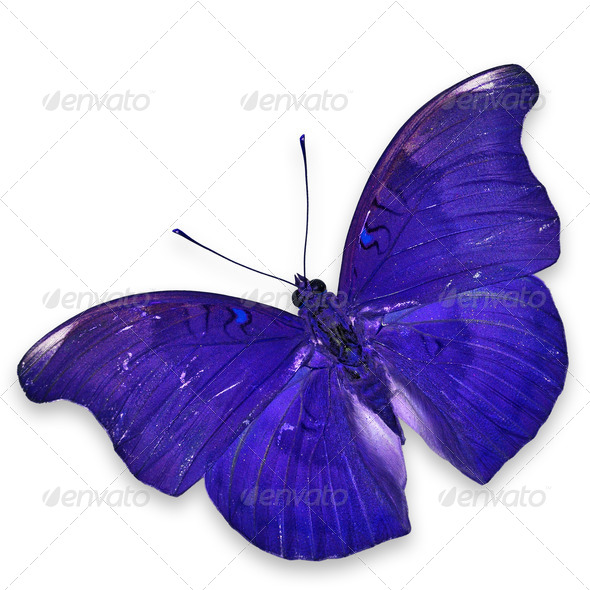 PhotoDune Blue butterfly 3920011