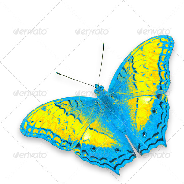 PhotoDune colorful butterfly 3920024