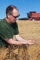 farmer holding flax seeds - PhotoDune Item for Sale
