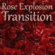 Rose Explosion Transition - VideoHive Item for Sale