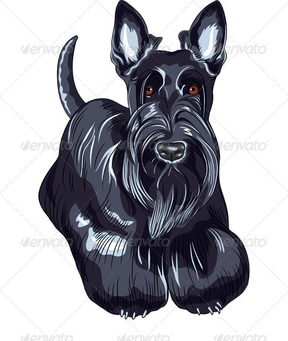 GraphicRiver Vector Sketch dog Scottish Terrier Breed 3925283