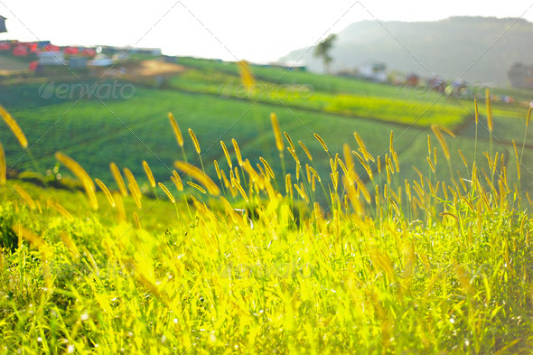 Mountain landscape, phuthapboek of thailand - Stock Photo - Images