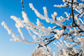 Snow On Branches - PhotoDune Item for Sale