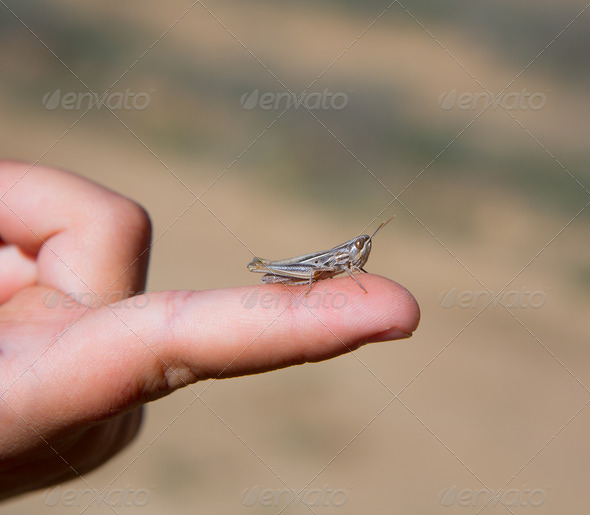 PhotoDune kid hand holding grasshopper bug macro 3941932