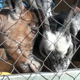 Goats Eat Greedily - VideoHive Item for Sale
