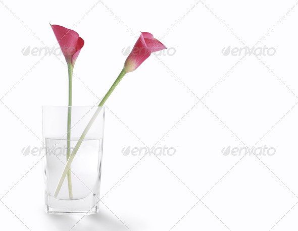 PhotoDune Rosehip flower in a glass of clear water 3963984