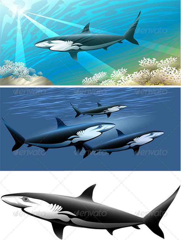 GraphicRiver Shark Set 3952493