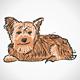 Sitting Yorkshire Terrier