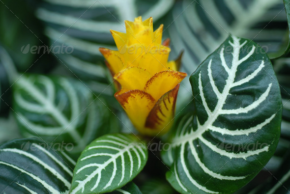 PhotoDune Yellow Croton Flower 3987424