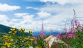 Flowers Blooming in the Mountains Landscape - PhotoDune Item for Sale