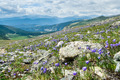 Colorado Wildflowers Mountain Landscape in Summer - PhotoDune Item for Sale