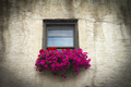 Italian Windowsill With Colorful Flowers - PhotoDune Item for Sale