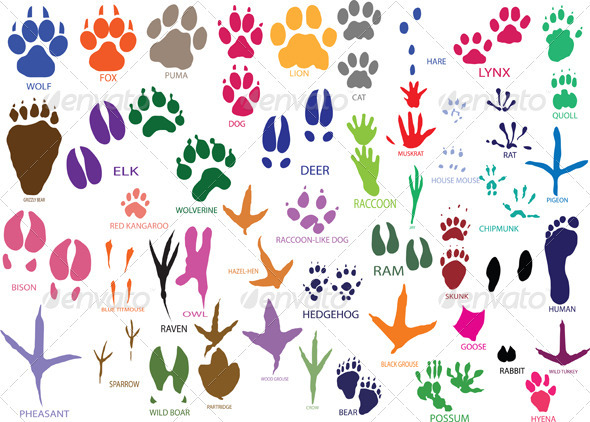 GraphicRiver Paw Prints 3983991
