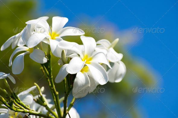 PhotoDune flowers 3984308