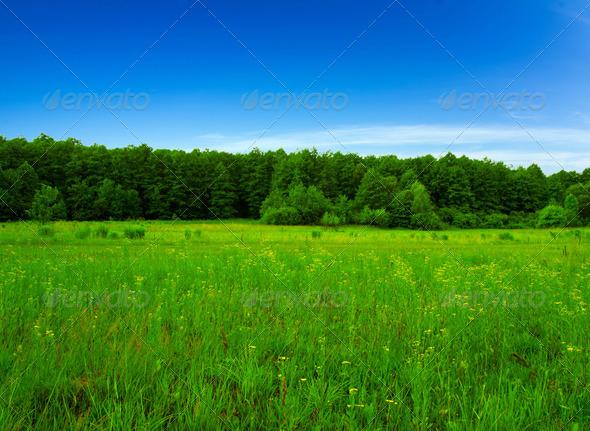 PhotoDune Field 3984309