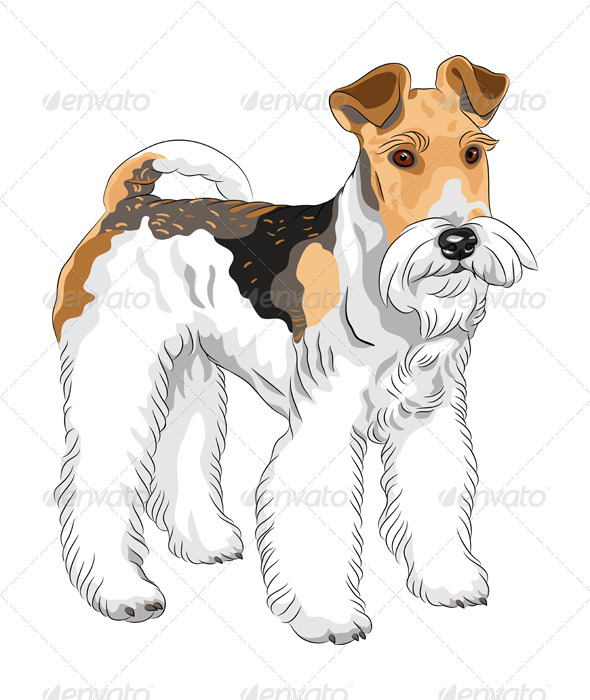 Vector Sketch Dog Wire Fox Terrier Breed Standing - Animals Characters