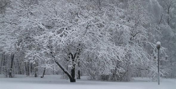 Snowfall In A Park
