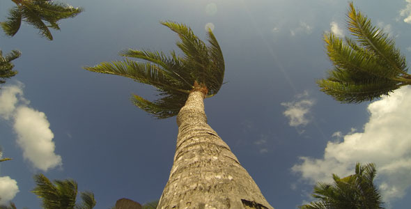 Time Lapse of Palm Trees and Sky