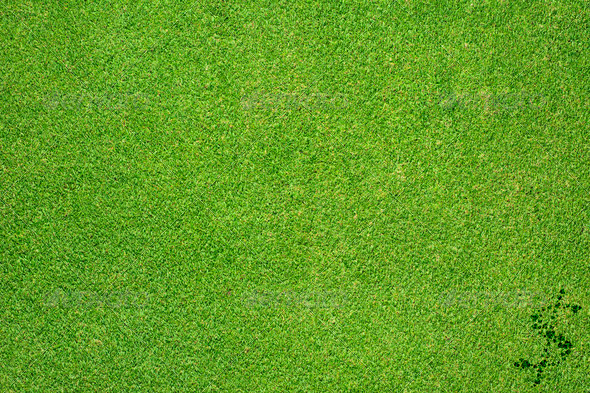 Dollar icon on green grass background - Stock Photo - Images