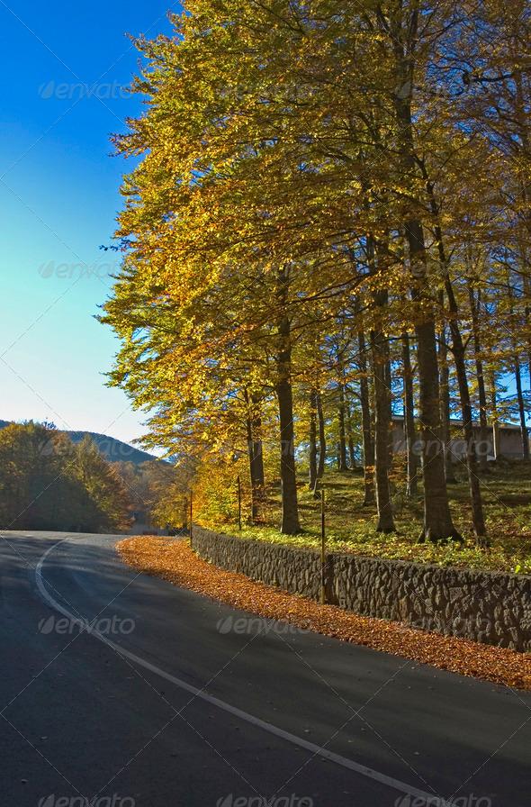 PhotoDune autumn road 4022678