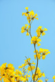 yellow flowers bloom in spring - PhotoDune Item for Sale