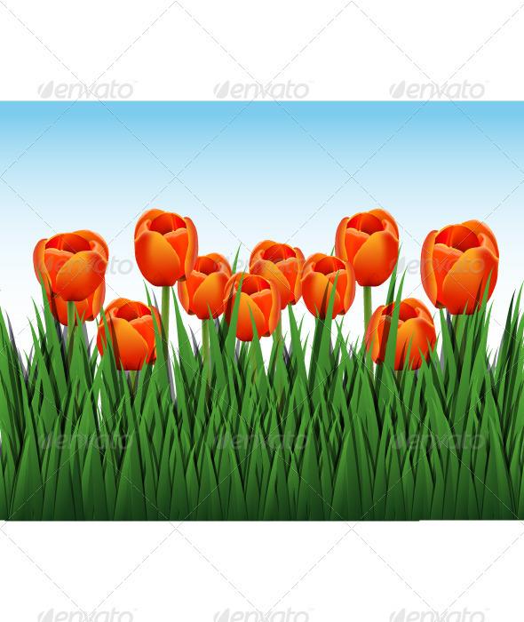 GraphicRiver orange tulips 4022777