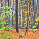 Autumn Leaf Forest - VideoHive Item for Sale
