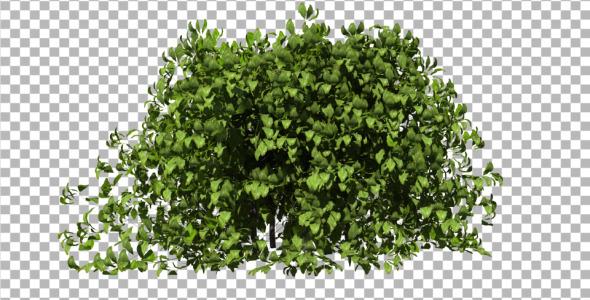 3DOcean Bush 4029220