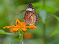 A beautiful butterfly sitting in the flower - PhotoDune Item for Sale