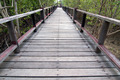 A wooden bridge on mangrove forest - PhotoDune Item for Sale