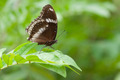 A beautiful butterfly sitting in the tree - PhotoDune Item for Sale
