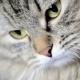 Cat Macro - VideoHive Item for Sale