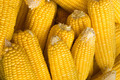 Yellow Raw Corn - PhotoDune Item for Sale
