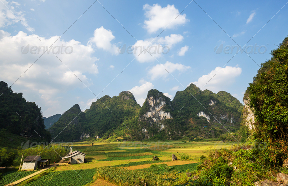 Fields in Vietnam - Stock Photo - Images