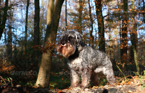 PhotoDune dog in the forest 4102067