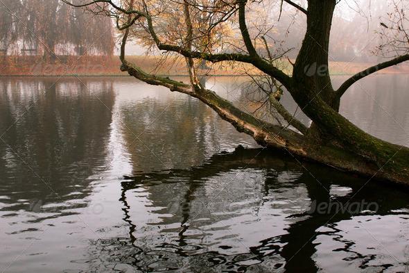 PhotoDune old tree in water 4102094
