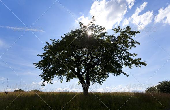 PhotoDune tree silhouette 4102112