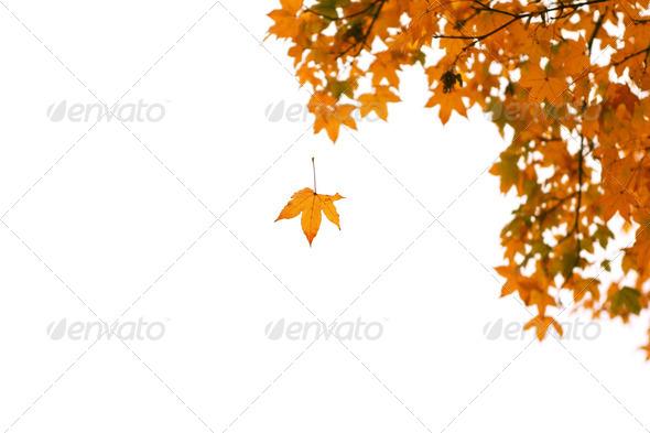 PhotoDune fall over white 4102124