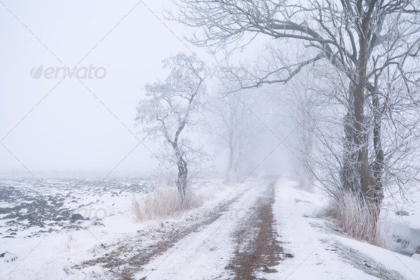 PhotoDune rural road in fog and snow 4102137