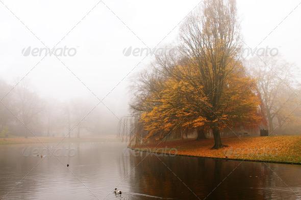 PhotoDune autumn in the park 4102247