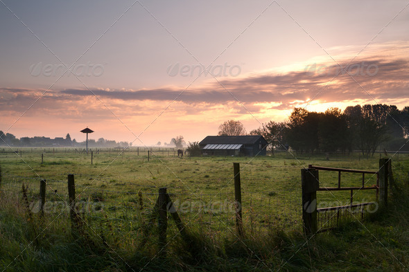 PhotoDune Dutch farn in morning 4102257