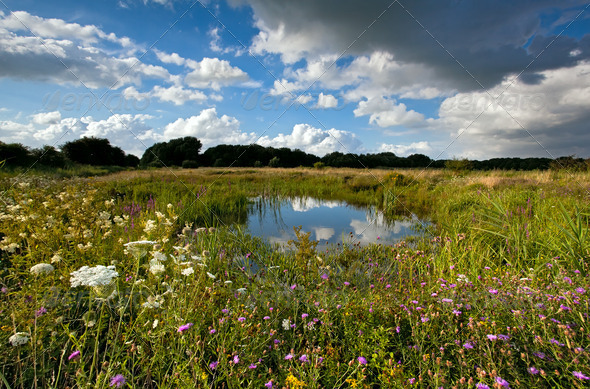 PhotoDune summer pasture with pond 4102274