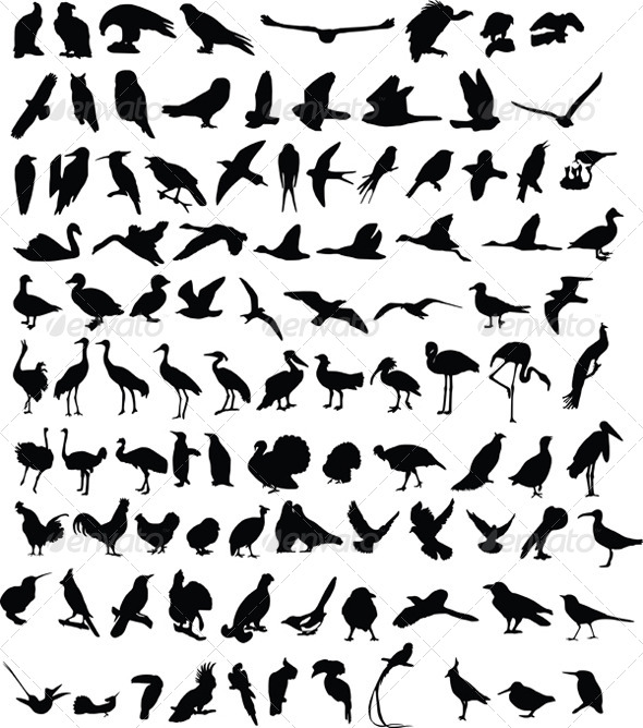 GraphicRiver 100 Birds 4044382